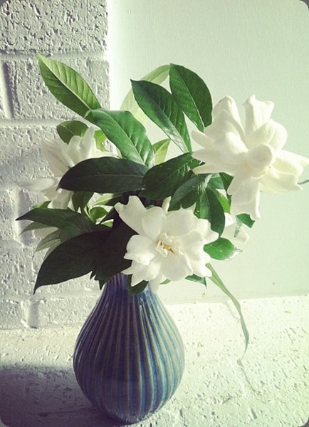 gardenia 578109_10151616124104144_1996293879_n tulip