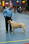 20130510-Bullmastiff-Worldcup-0328.jpg