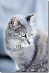 cat (1 of 1)
