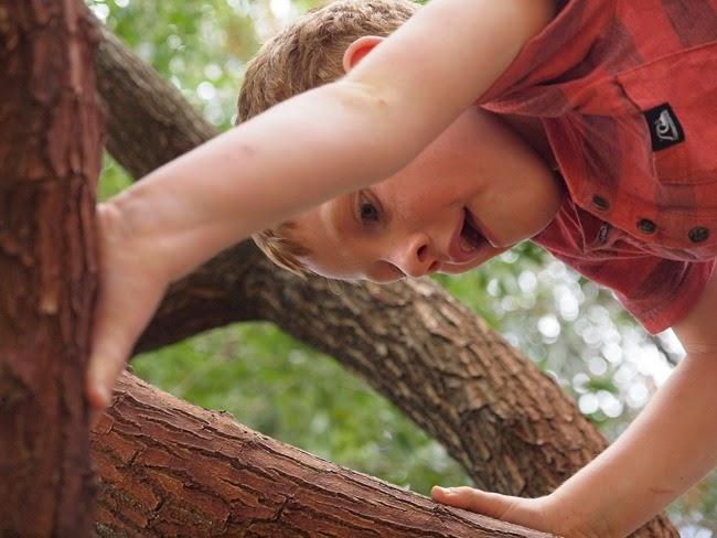 ebe - climbing a tree