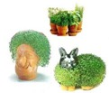Chia Pets
