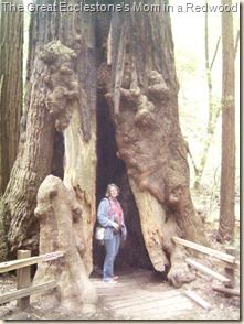 Matt's mom inside a redwood