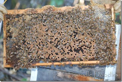 Beekeepers 09-11 014