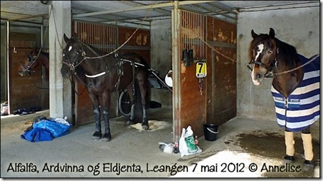 2012-07mai-1pl-jenta_01