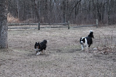 The boys playing ball