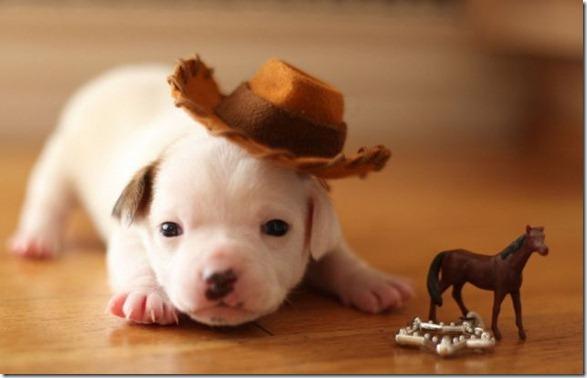 cute-funny-animals-22