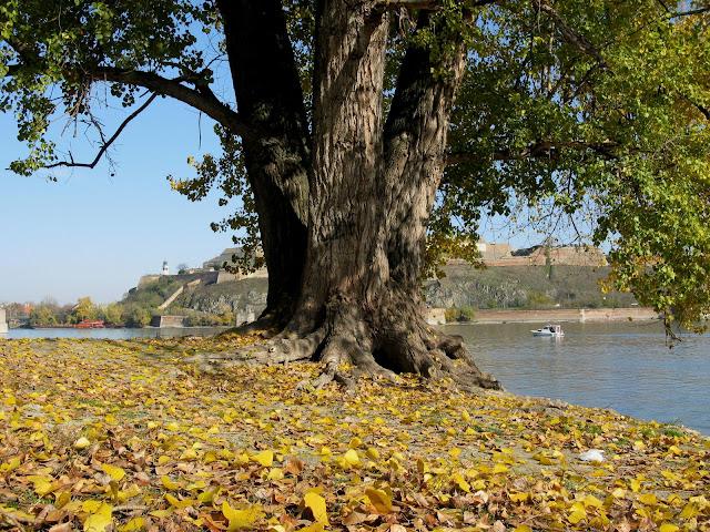 Jesen - fotografije - Page 4 J17