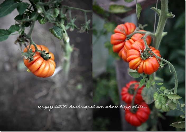 Pomidory mojej mamy i tarta z pomidorami  w wersji klasycznej i bezglutenowej4