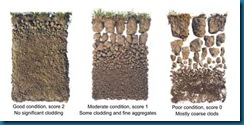 71-soils-test-pic4