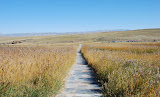 Tianshan - Paysage prairie et chemin