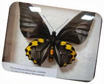 бабочки 109