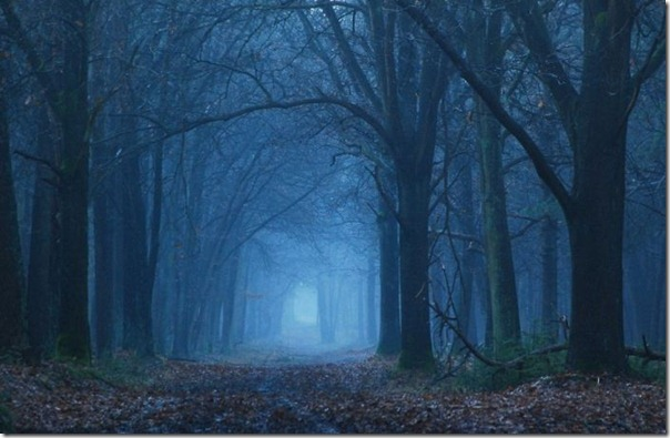 Florestas sombrias (15)
