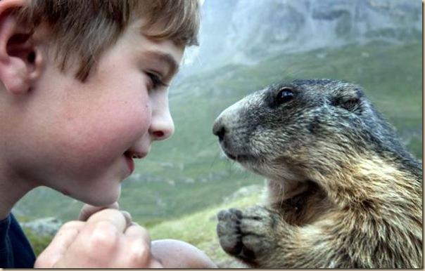 L'enfant et les marmottes-006