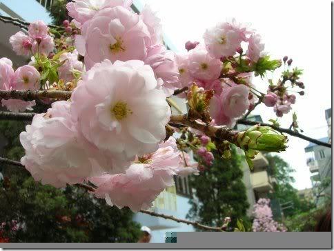 para san valentin rosas y flores (12)