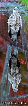 18. heron-kab