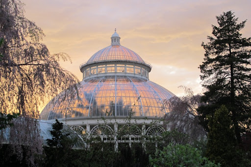 The conservatory looks like an opal with the sunset outlining the palm trees.