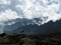 Kili Climb Day 2 - Mountain vistas
