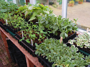 Rootrainers - in Greenhouse