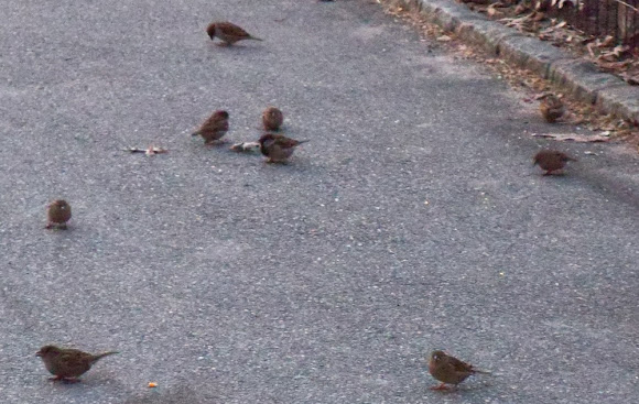 Birds on the Sidewalk