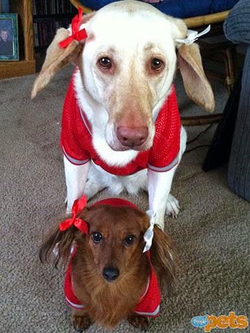 Две собачки с бантиками