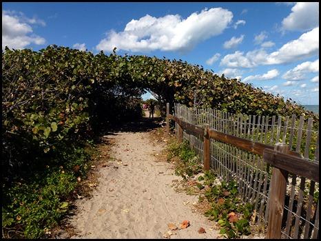 5b1 - Tour - First Beach Access - Sea Grapes along dunes