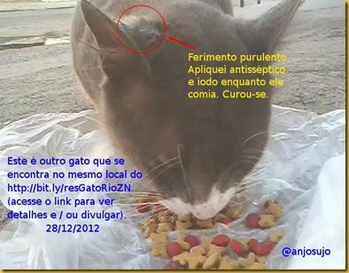 gato cinzento abolição rio zn