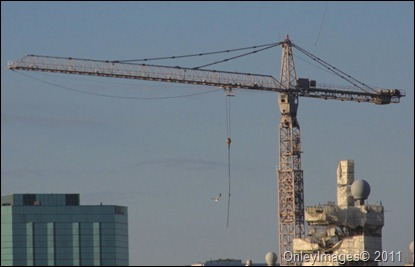 cranes0817 (10)