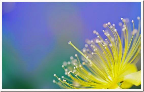 flor-macro-y-desenfoque_1920x1200_348
