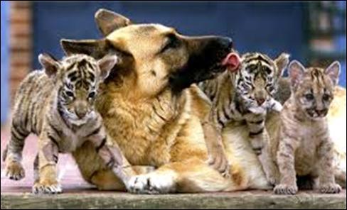 DNA e cane