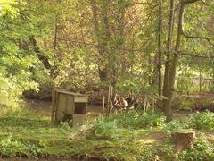 2011.09.23-020 gibbons