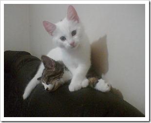 knas och bror