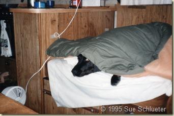 Sadie under blankets with heater
