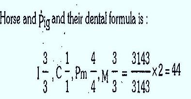 dental-formula