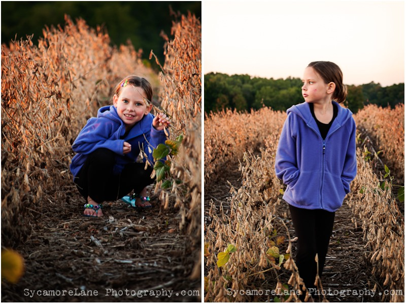 SycamoreLane Photography- Soybean harvest