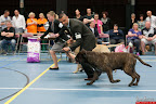20130510-Bullmastiff-Worldcup-1181.jpg