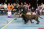 20130510-Bullmastiff-Worldcup-1181.jpg