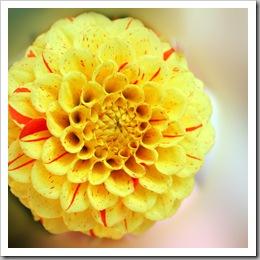 Sommerblumen_5a