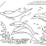 Dibujo de Delfines para colorear.jpg