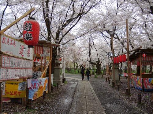 平野神社花見茶屋遊楽