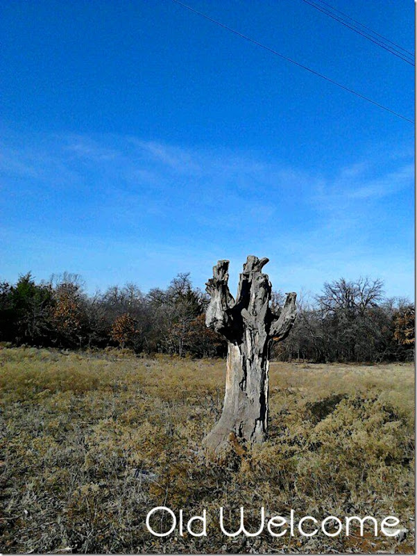 old stump
