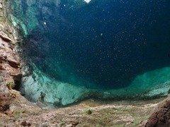 Looking down into Zaci Cenote in Valladolid