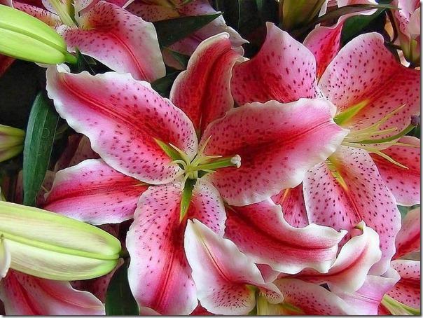 flor día del amor (42)