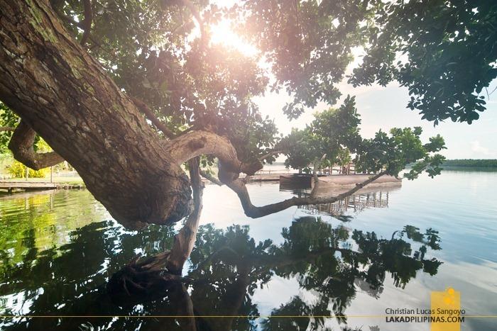 Lake Danao at Camotes Island