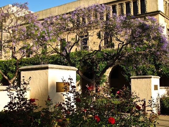 Cal Tech Campus (1)