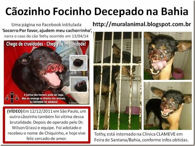 Cãozinho Focinho Decepado na Bahia