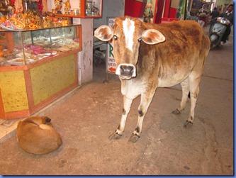 india 2011 2012 191