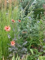 prairie garden2