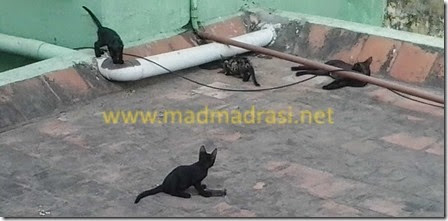 cats-on-roof-playing-with-dead-mouse