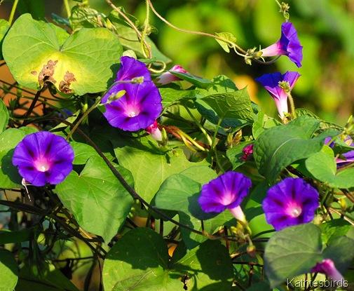6. flowers-kab