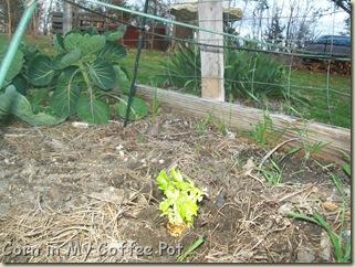 Garden -Jan 2012 002